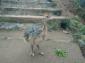 四川重庆鸵鸟-非州鸵鸟-观赏鸵鸟-鸵鸟苗